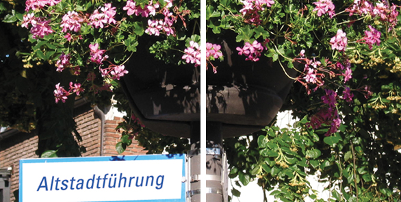 Altstadtführung Blumenbild